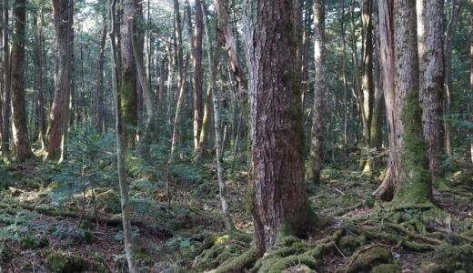 テレビ東京「昼めし旅」に、青木ヶ原樹海のドローン映像を提供!