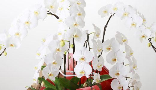 胡蝶蘭をお祝いに!祝い花のネット通販サイト5選!